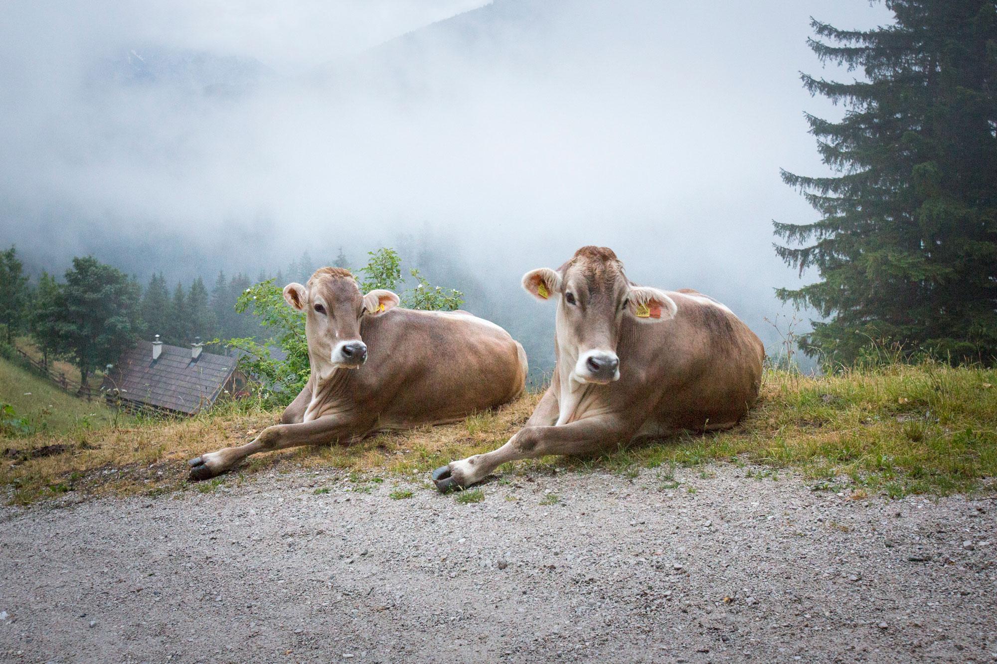 Steirmark-Austria,-Trekking.19.jpg