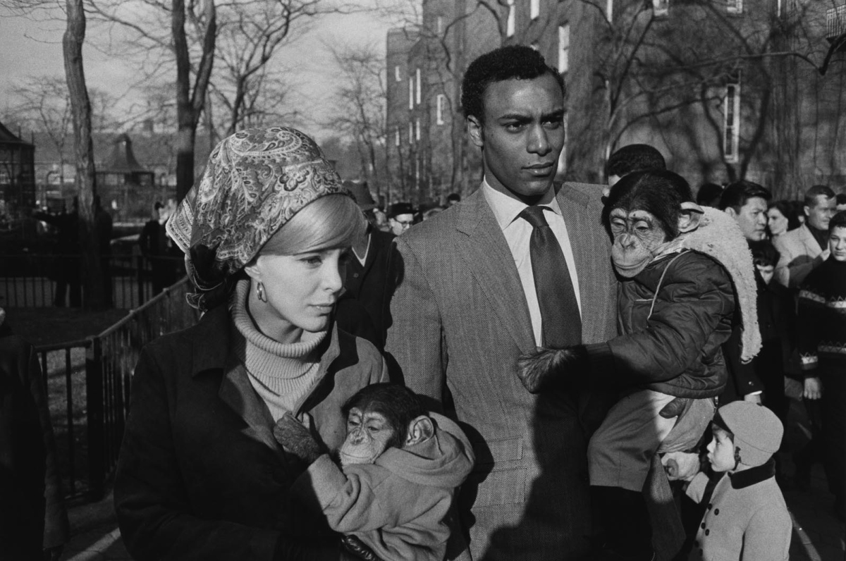 Garry Winogrand - A couple with two chimpanzees.