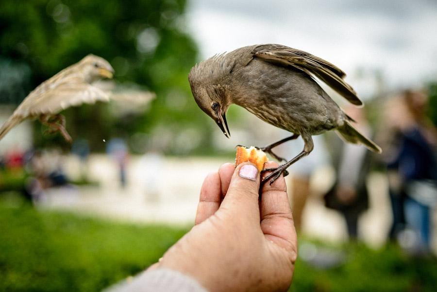 Notre Dame birds, Paris, 2014, Piotrek Ziolkowski