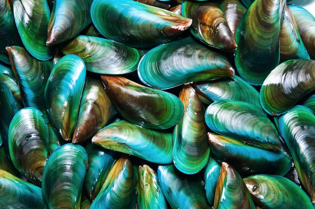 Mussels for Muscles!