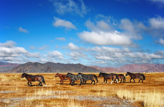 Run with the horses in Mongolia