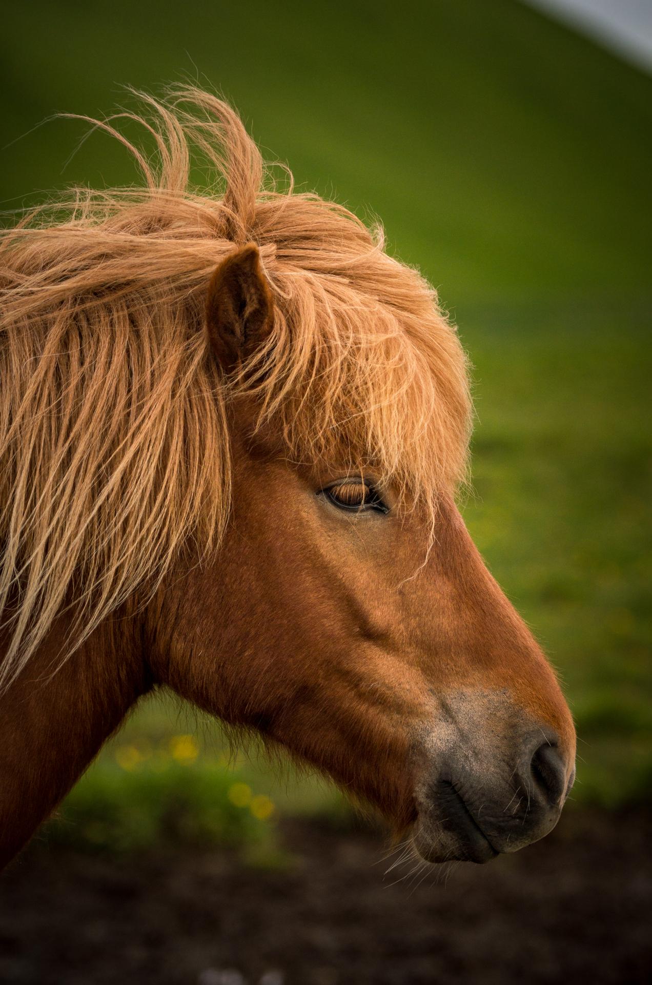 Horse_1_NoBorder.jpg