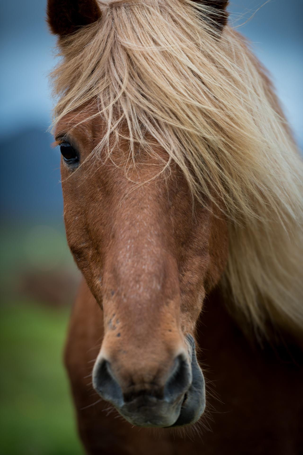 Horse_3_NoBorder.jpg