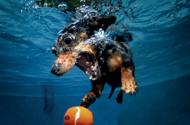 "Determined under-""water""-dog"