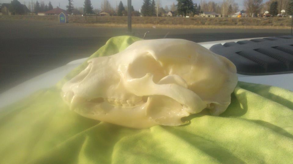Skull from 2012