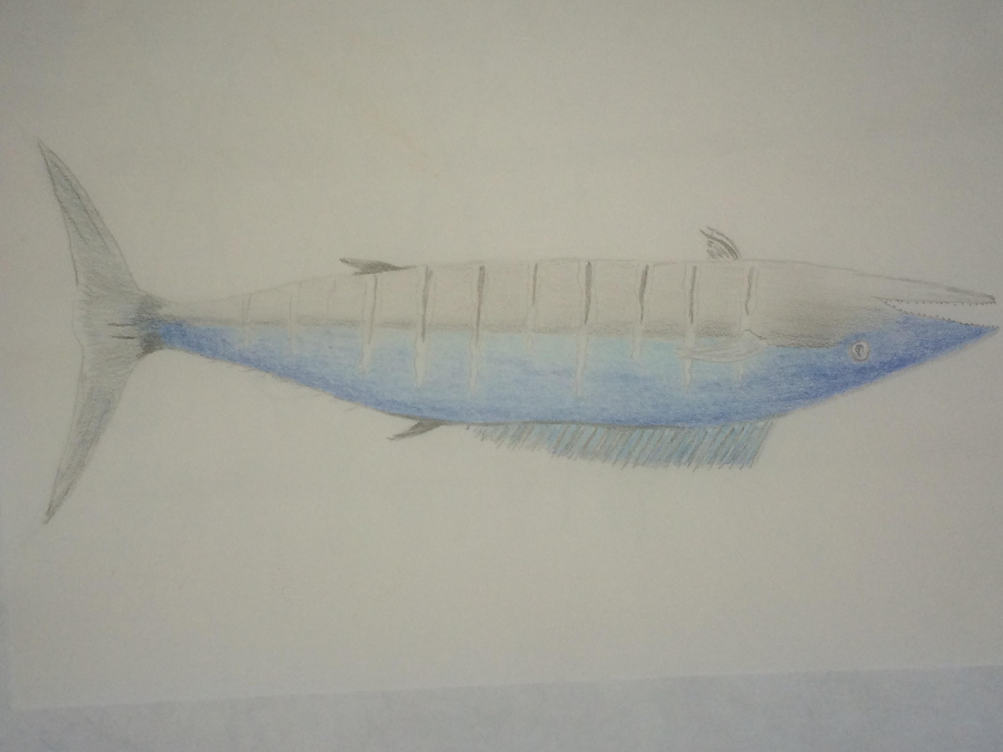 Ono fish
