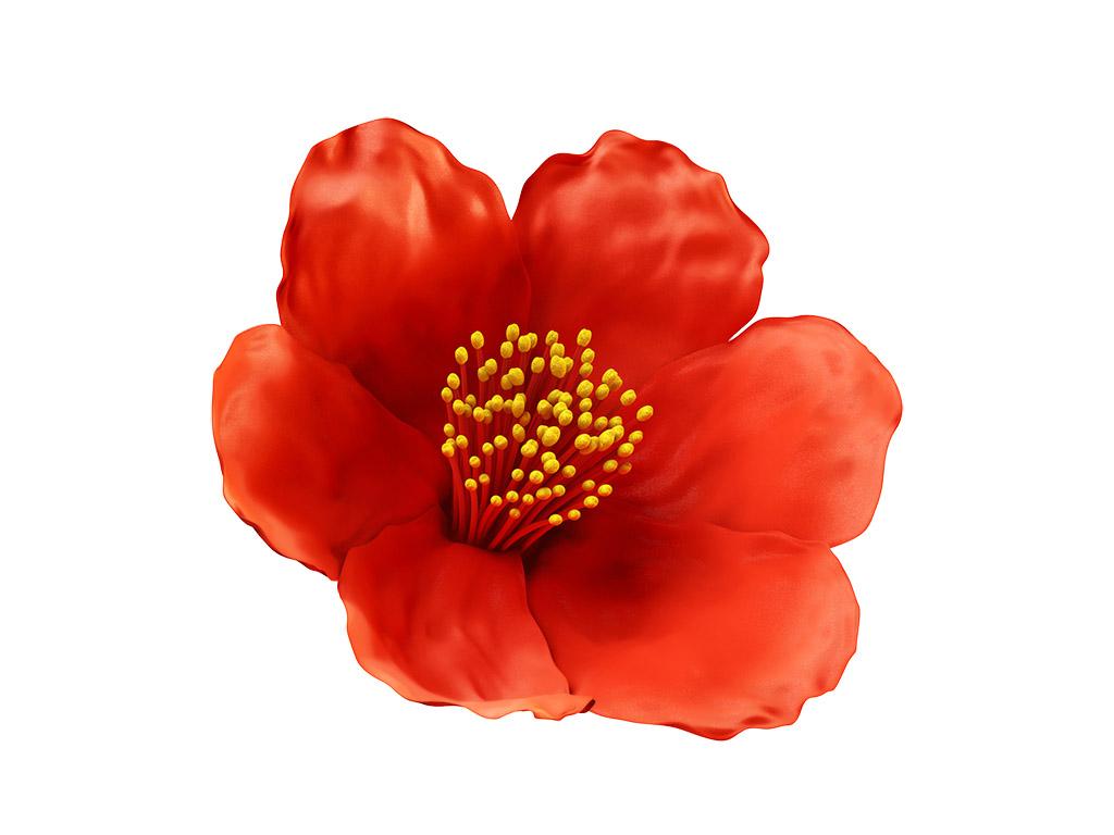 pomegranate-flower2.jpg