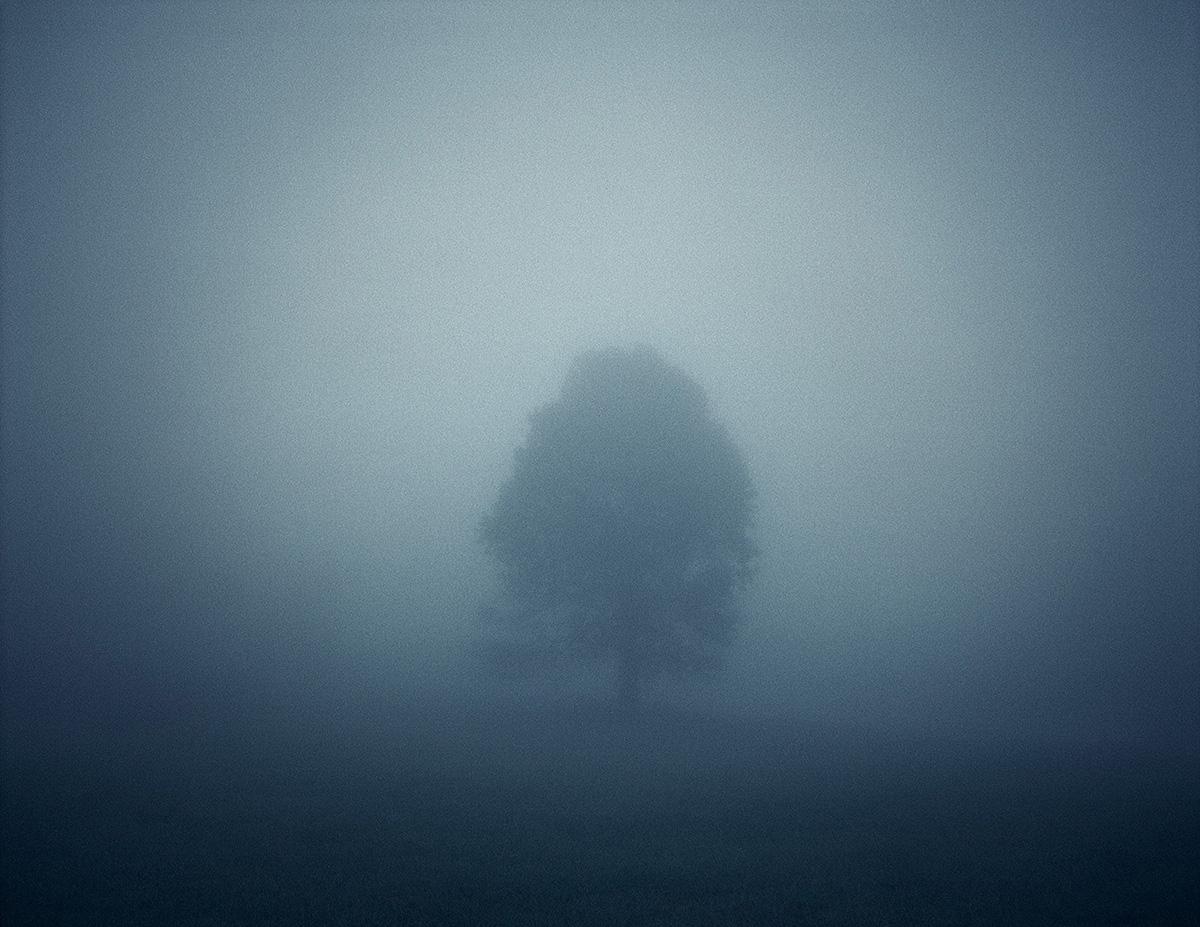 Fog Tree, Appalachian Mountains