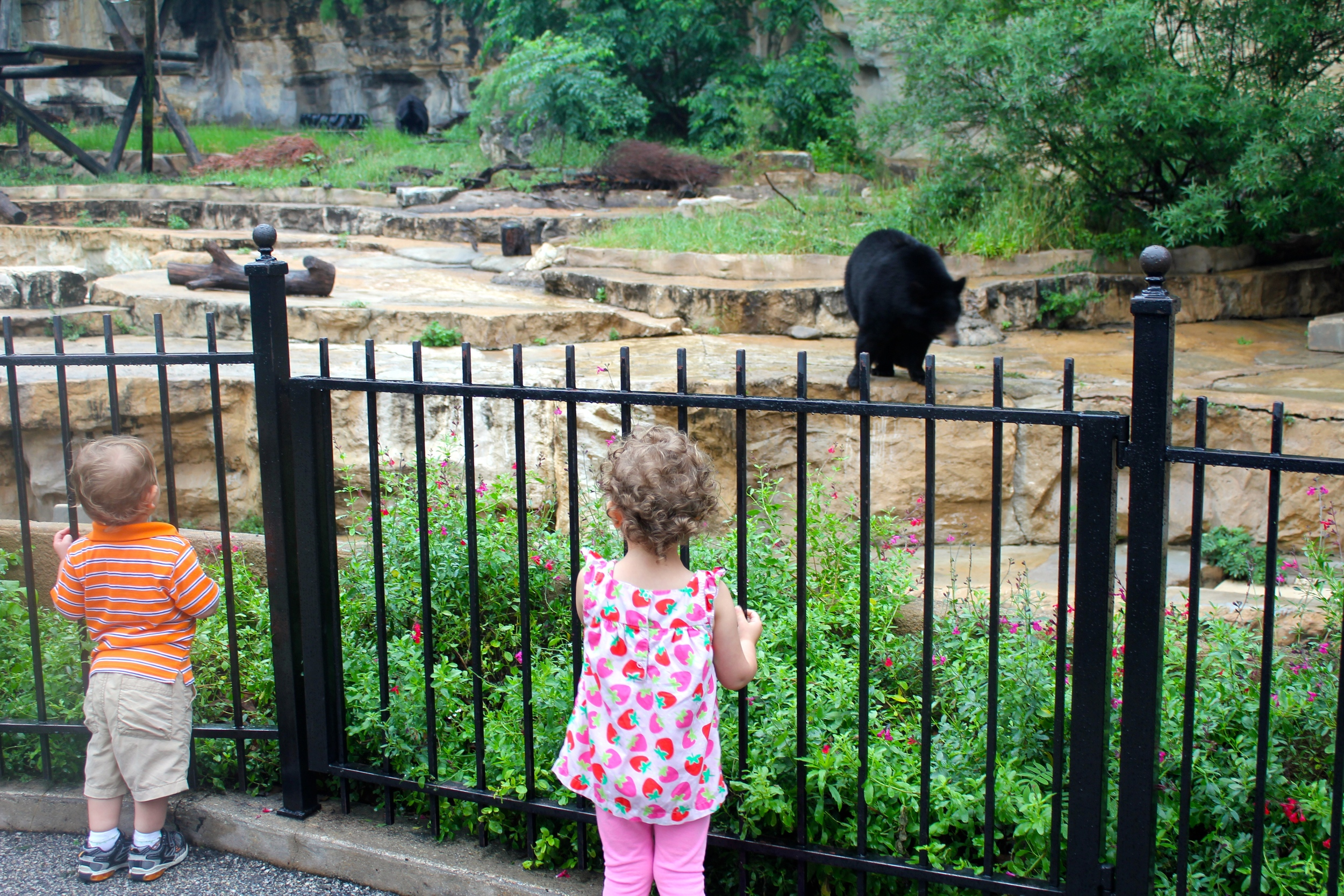 An American Black Bear and two small children, transfixed at the beingbefore them.