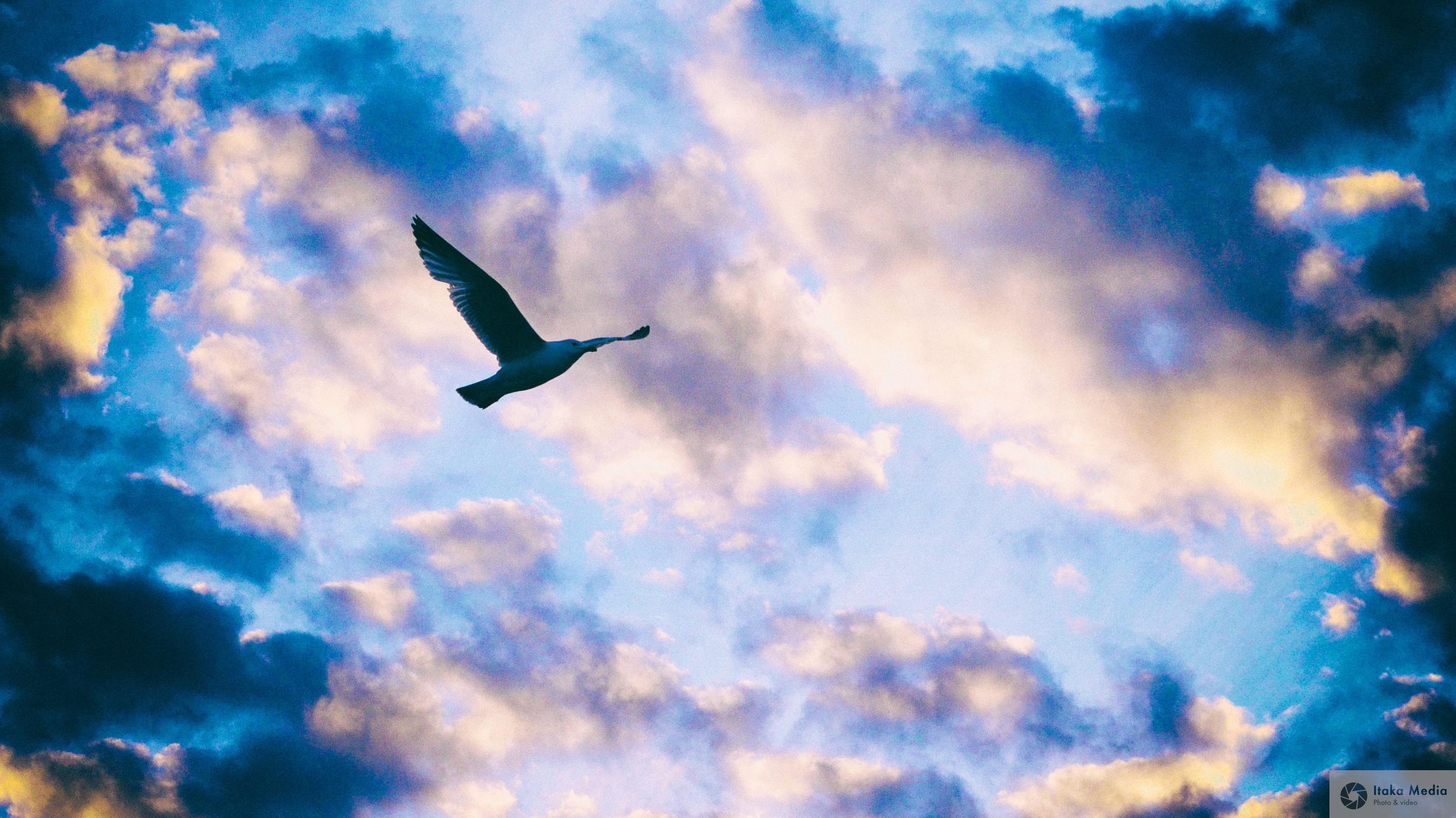 Seagull 10.jpg