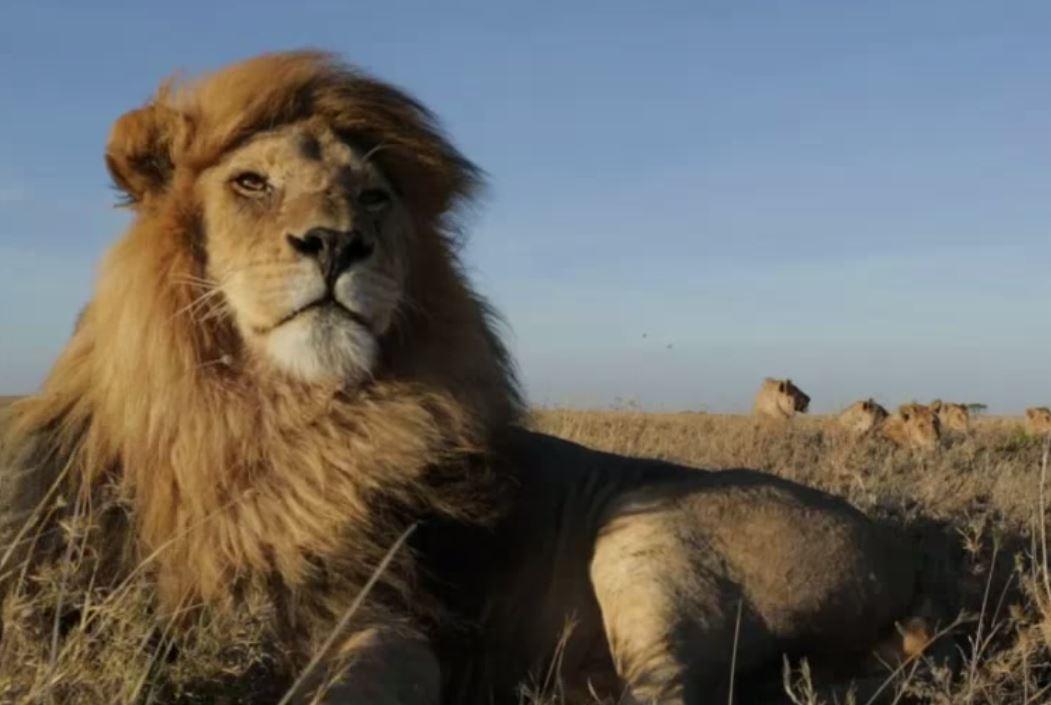 Capture lion.JPG