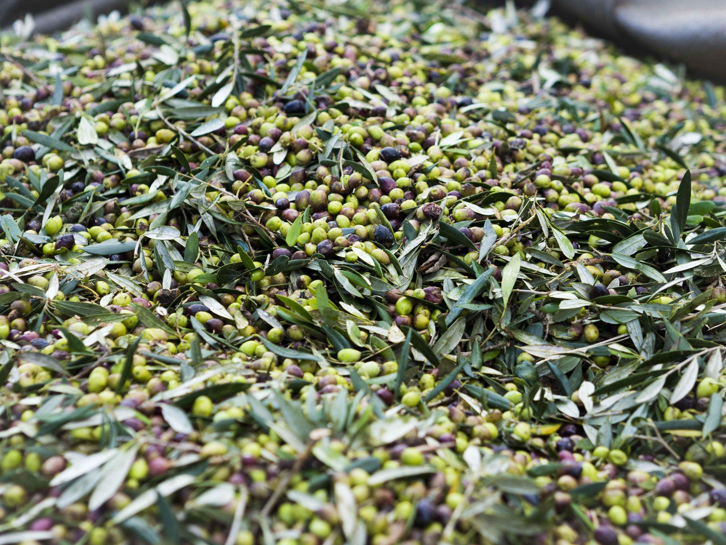 Olives from Kastro-2.jpg
