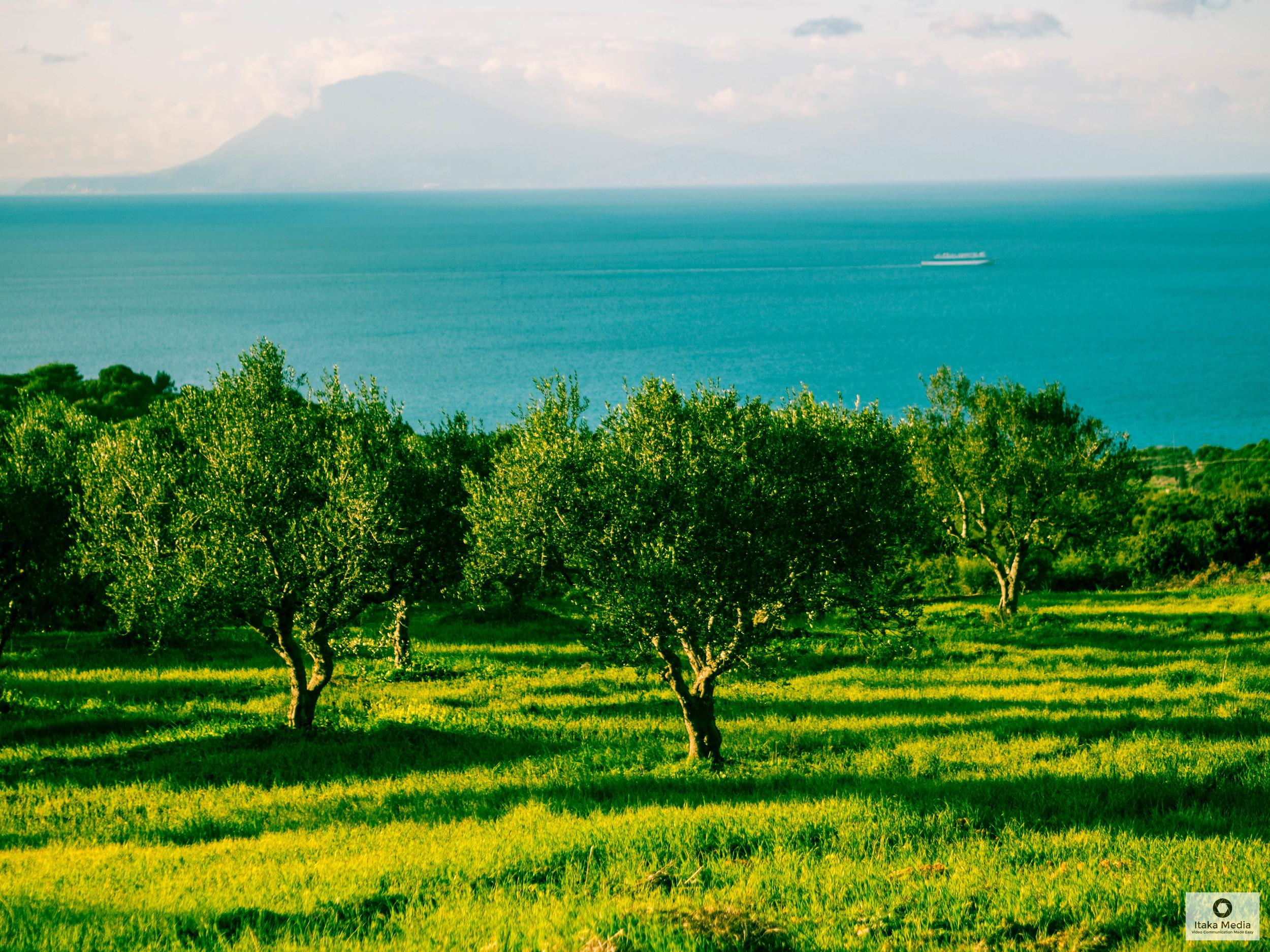 Olive trees-36.jpg