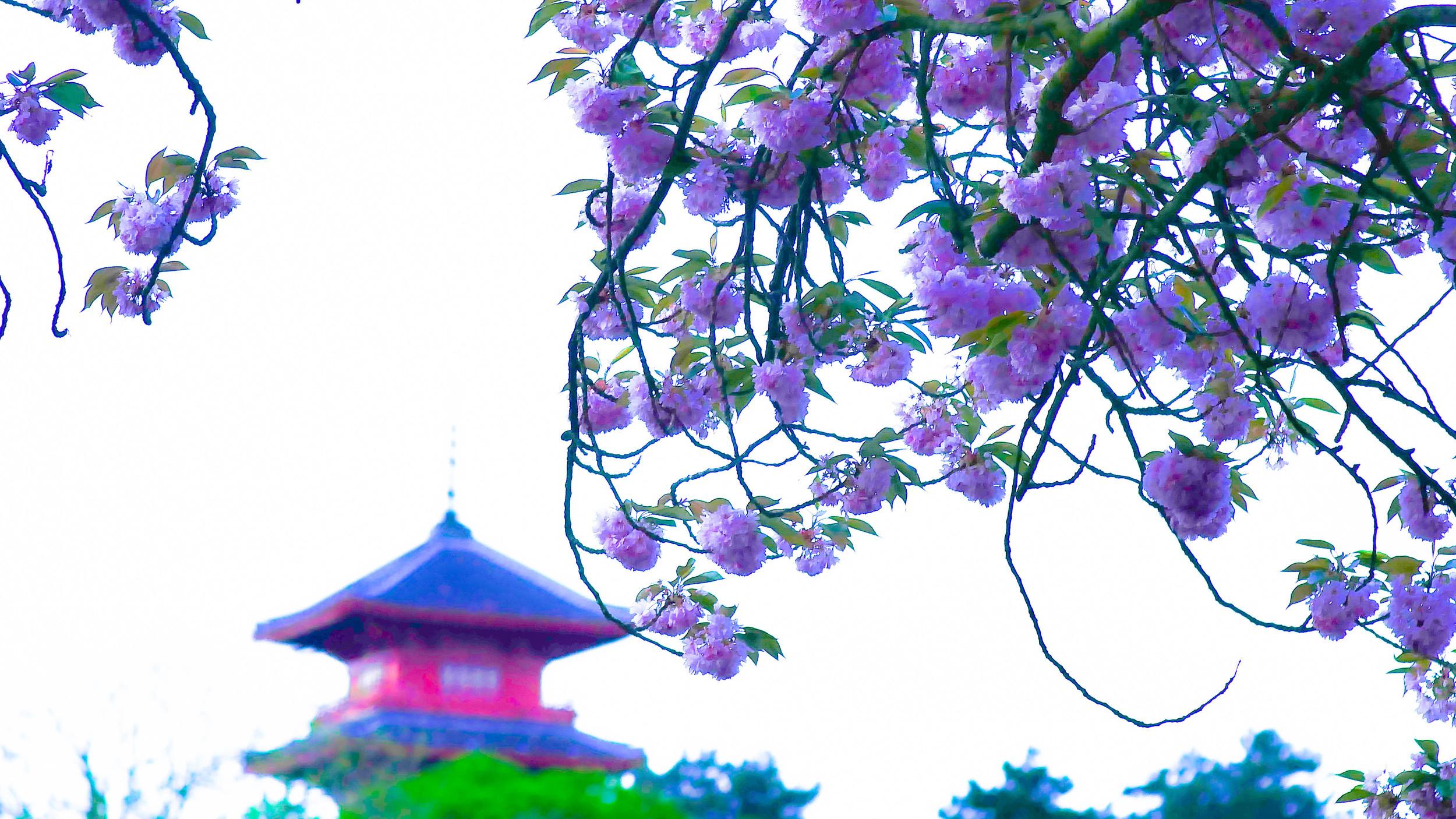 fleurs-6.jpg