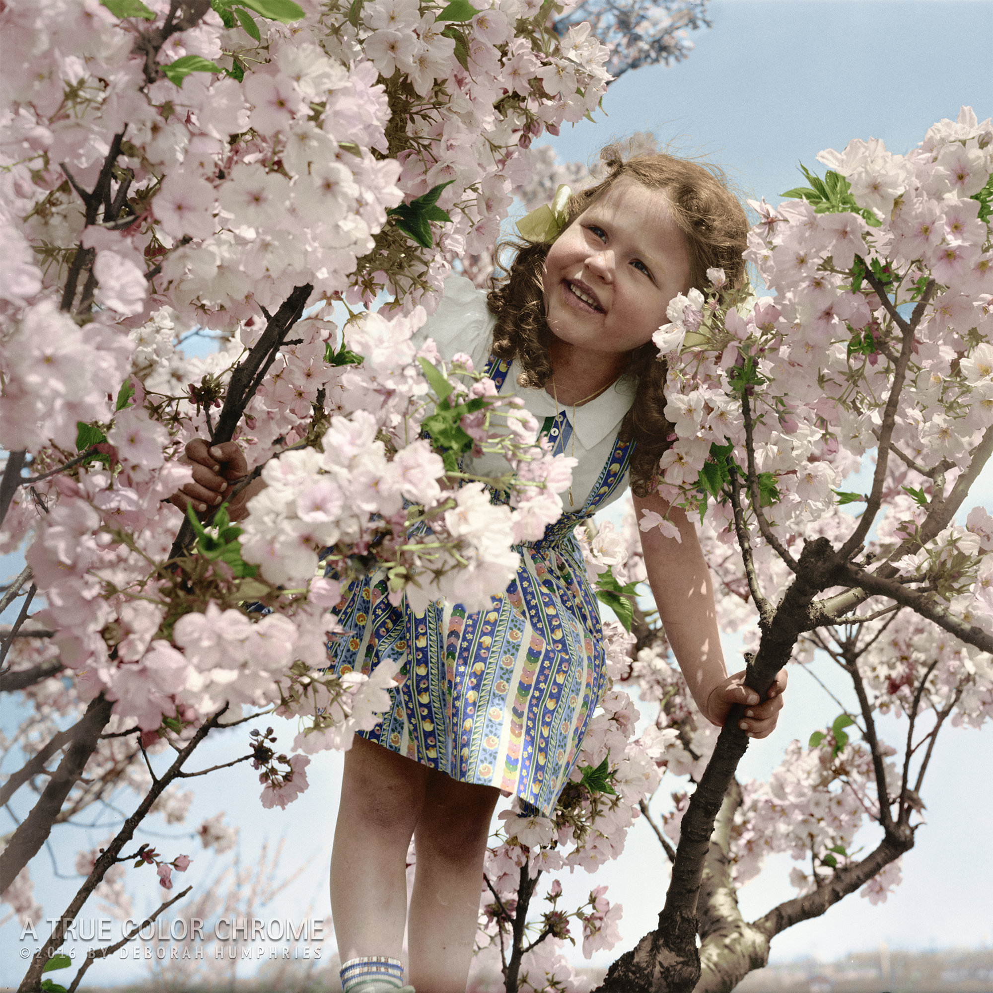 Little Girl in Cherry Tree, 1939