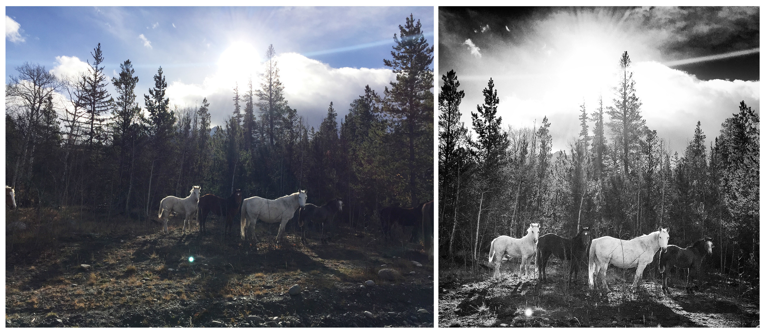 This photo of wild horses in the Nemiah Valley taken with an iPhone shows the photo before and after the photo was cropped and had Instagram filters applied. Follow John Lehmann on Instagram @JohnLehmann and the Globe and Mail @GlobeandMail