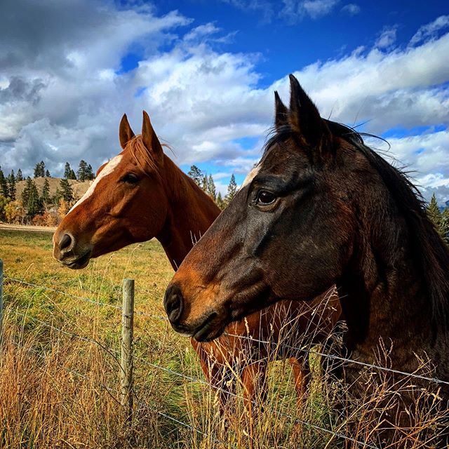 Friends. #horses #iphone