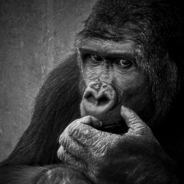 Emotions are within each of us and knowing we all feel something isn't limited to just us, but in all living things. . . . . .  #animallovers #animalpolis #animalsofinstagram #igscwildlife #animales #exclusive_animals #wildlifephoto #wildlifeaddicts #wildlifephotography #animalworld #awesomeglobe #animalofinstagram #animalsmood #wildlifeonearth #wildlifeplanet #thecritterhaven #animalsaddict #planet_of_animals #wildlife_seekers #animal_in_world  #explorecanada #canadaswonderland #igerscanada #gf_canada #ohcanada #unlimitedcanada #nikonphotography #nikontop #nikon_photography_ #nikon_photography