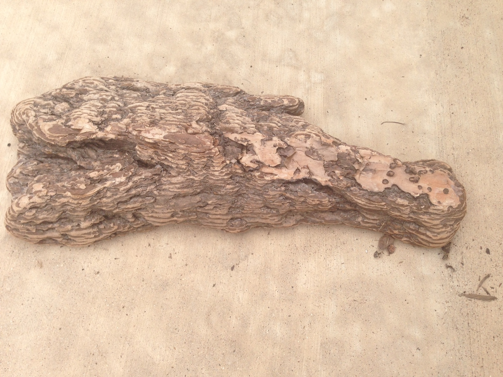 Driftwood #3 front
