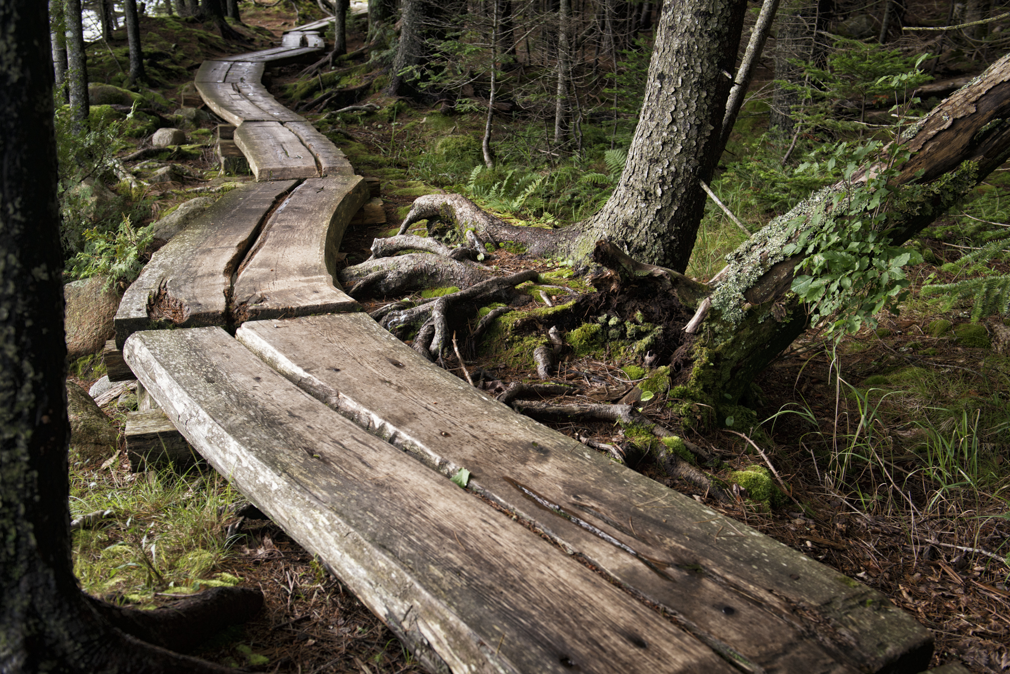 Jordan Pond Path, Acadia National Park, Maine