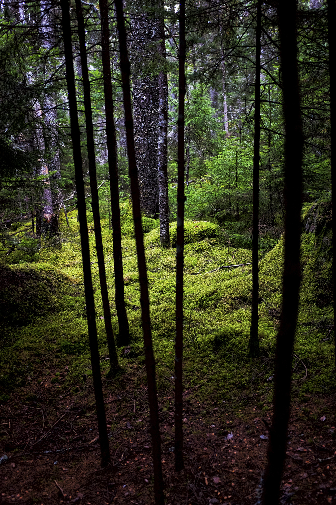 Mossy Trees, Little Long Pond, Seal Harbor, Maine