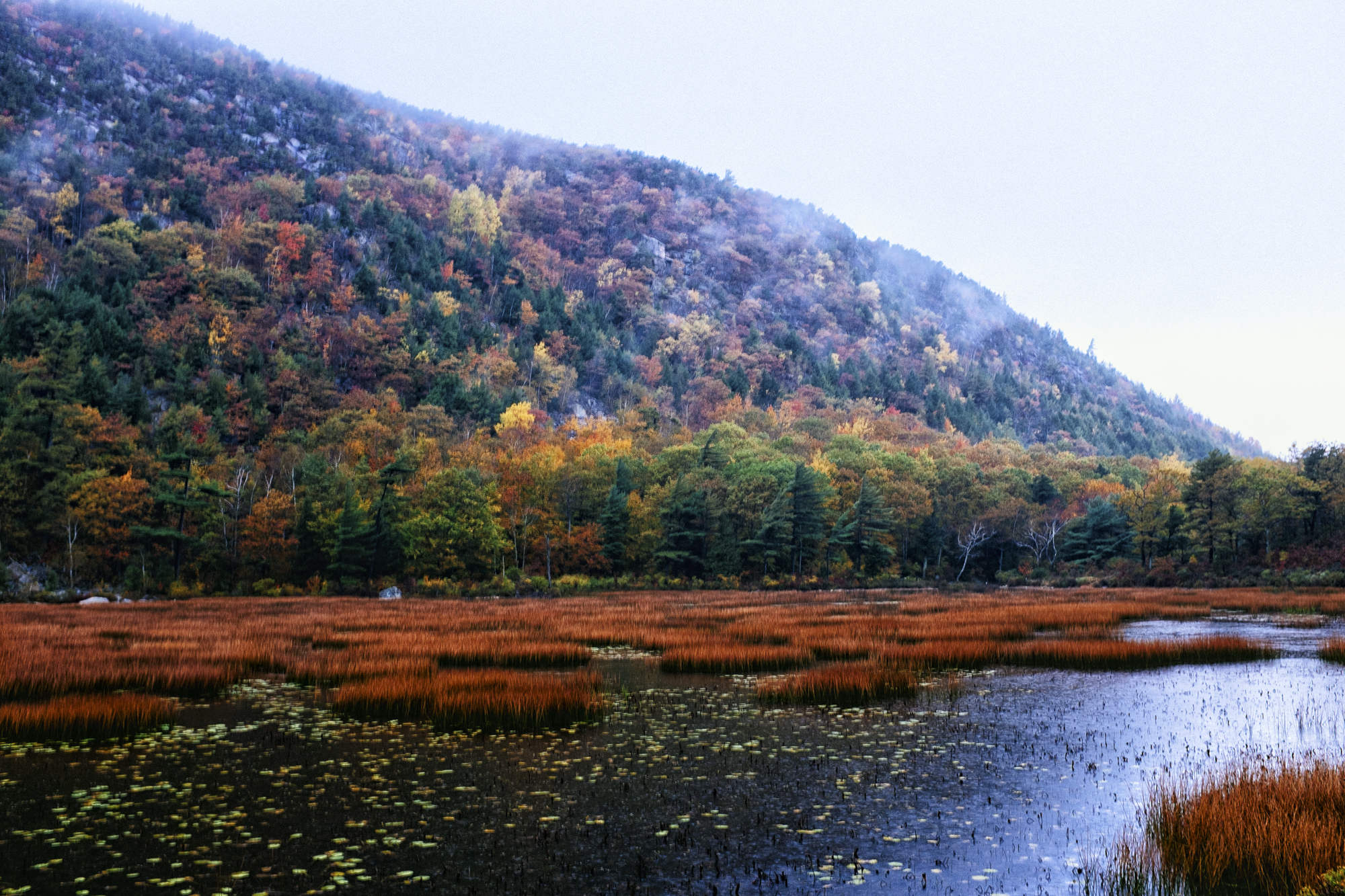 The Tarn, Acadia National Park, Maine