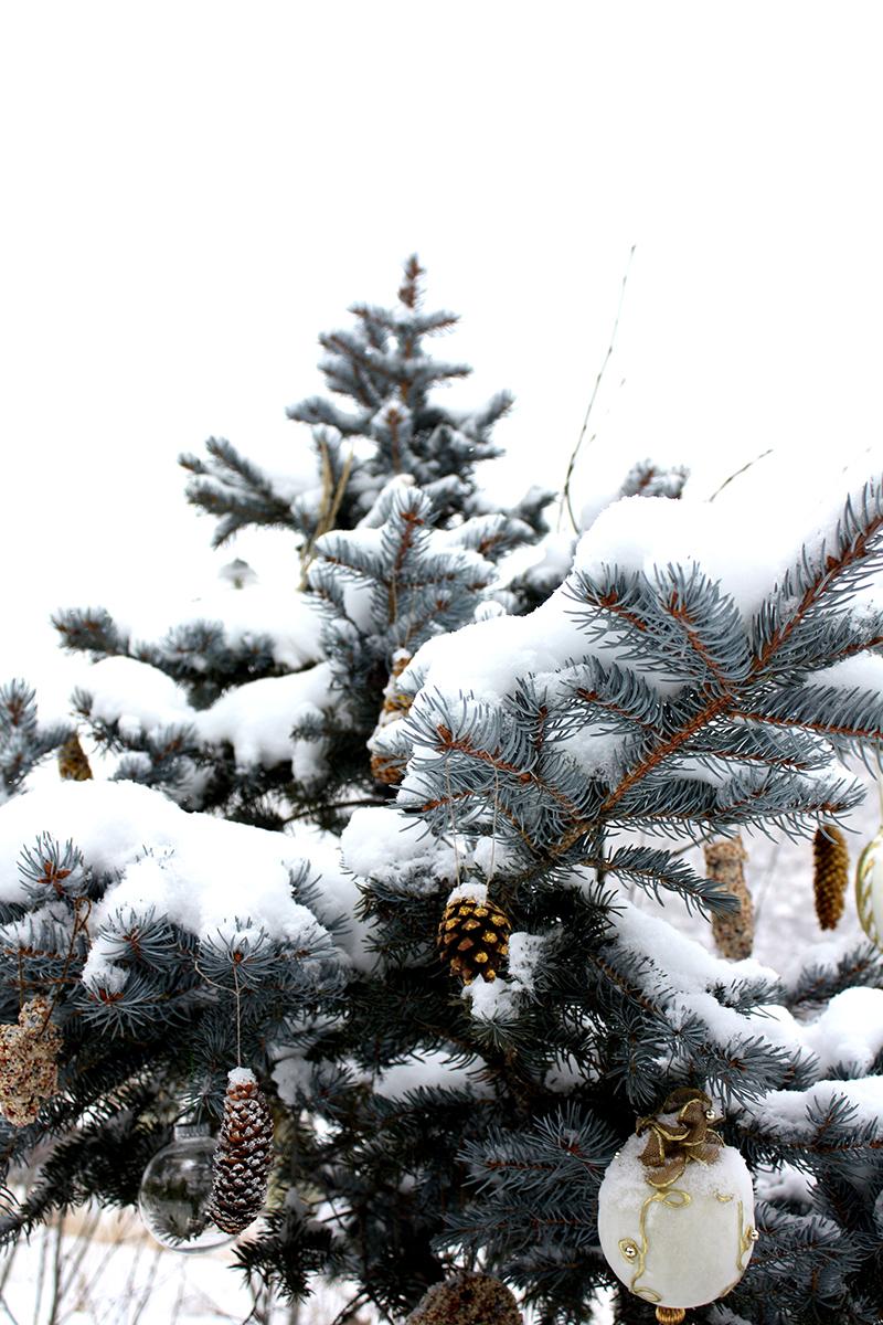 Outdoor Yule Tree