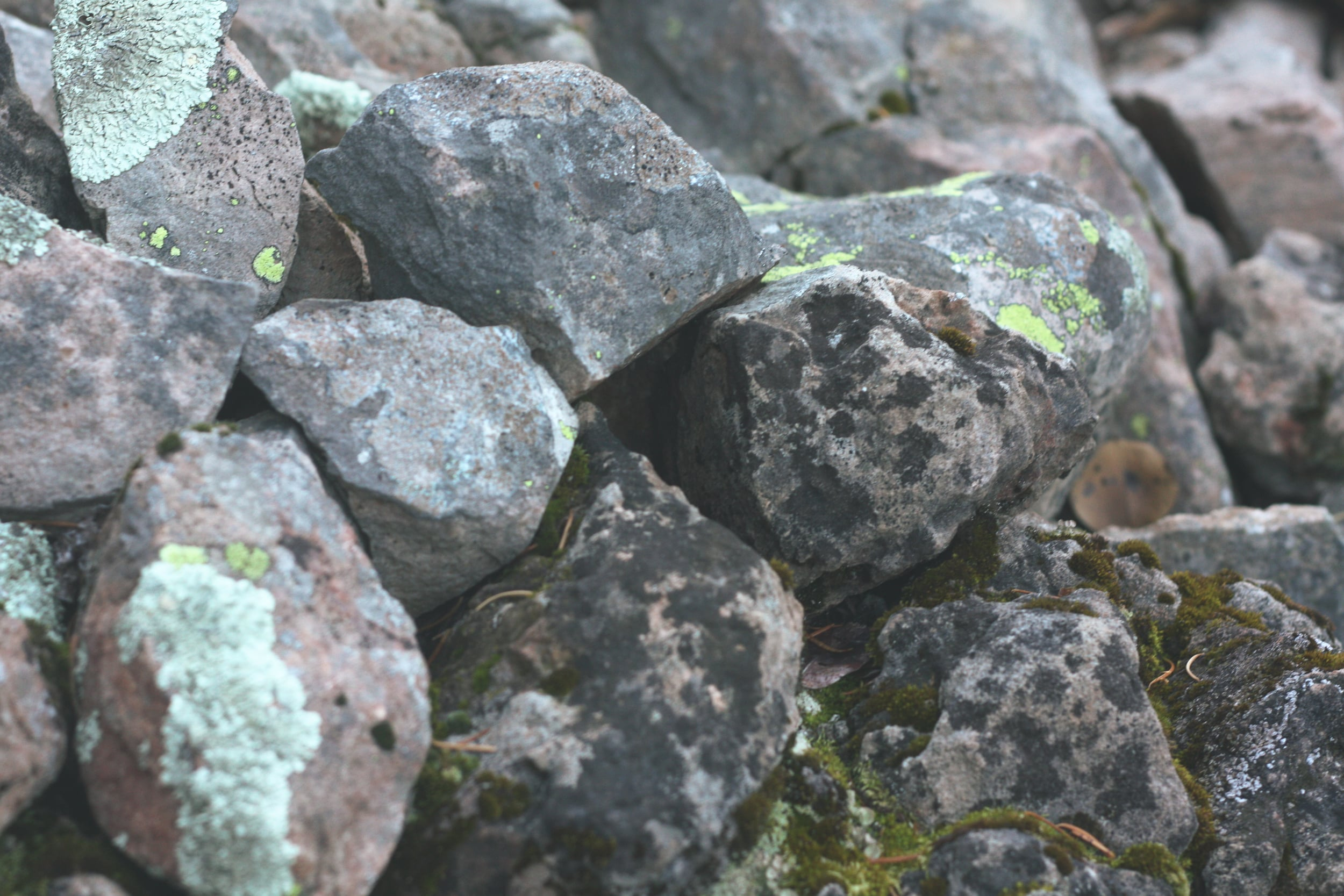 Mossy Covered Stones | Tree talker