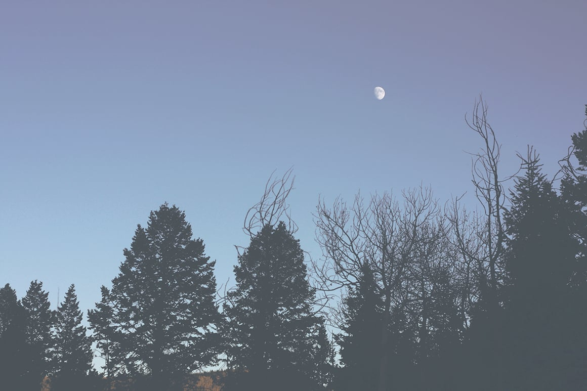 The Waxing Moon Over the Trees