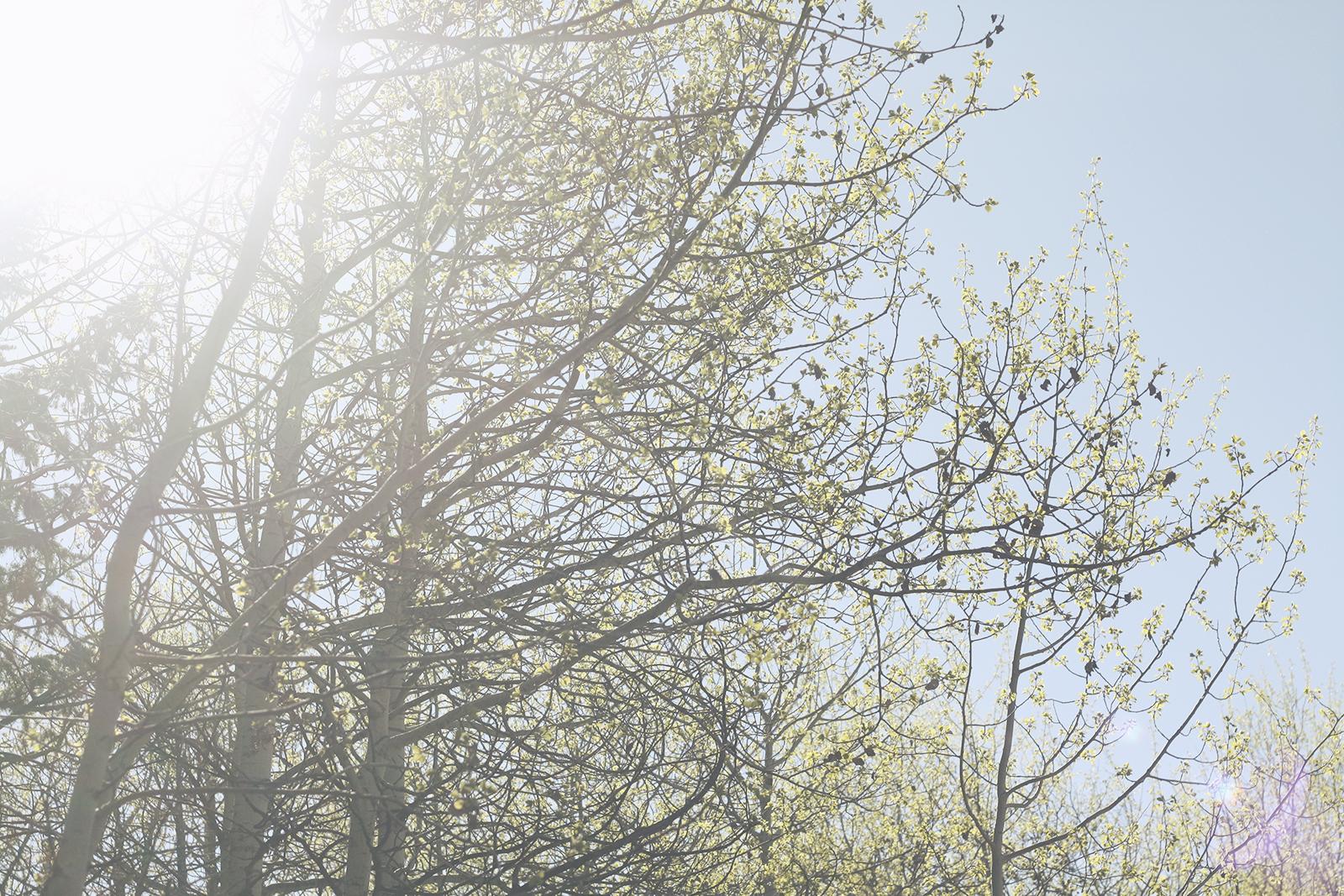 Sunlight through The Trees | Tree Talker
