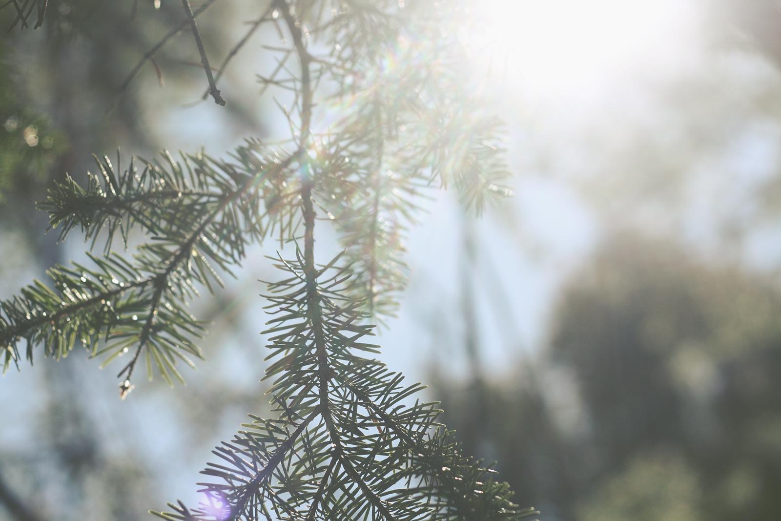 Spring Sun | Tree Talker Art