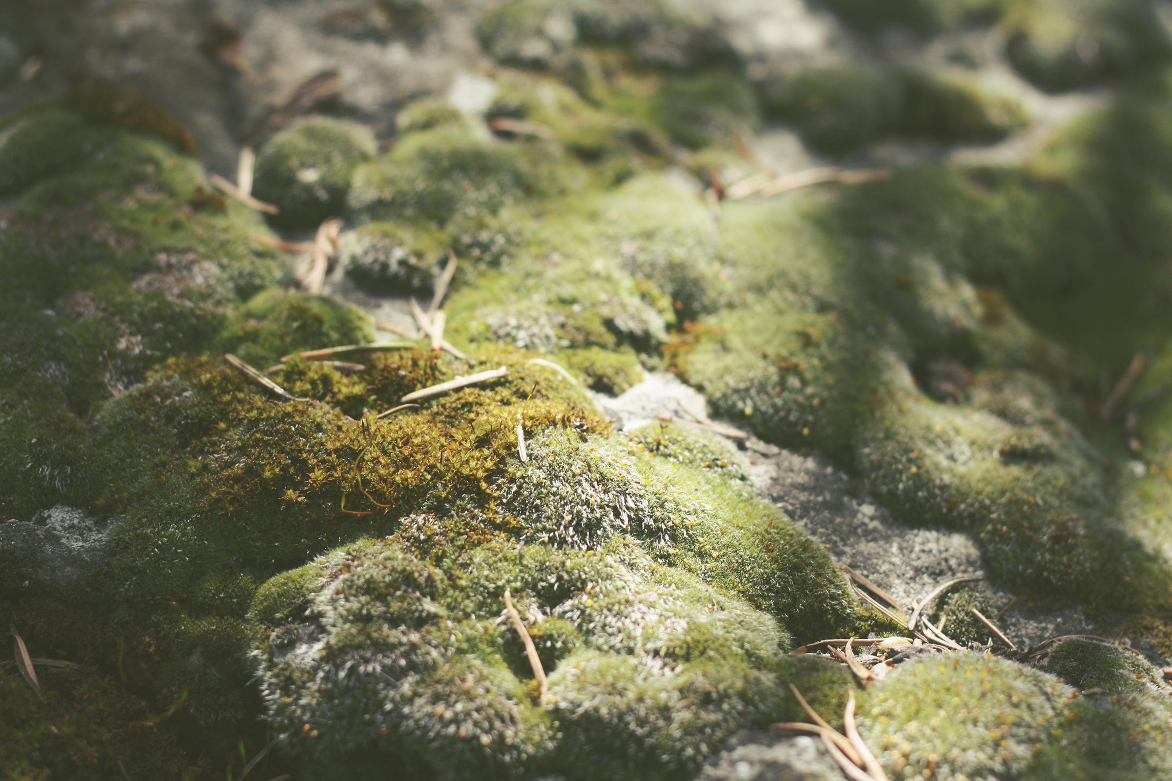 The Understory | Tree Talker Art Rachael Caringella