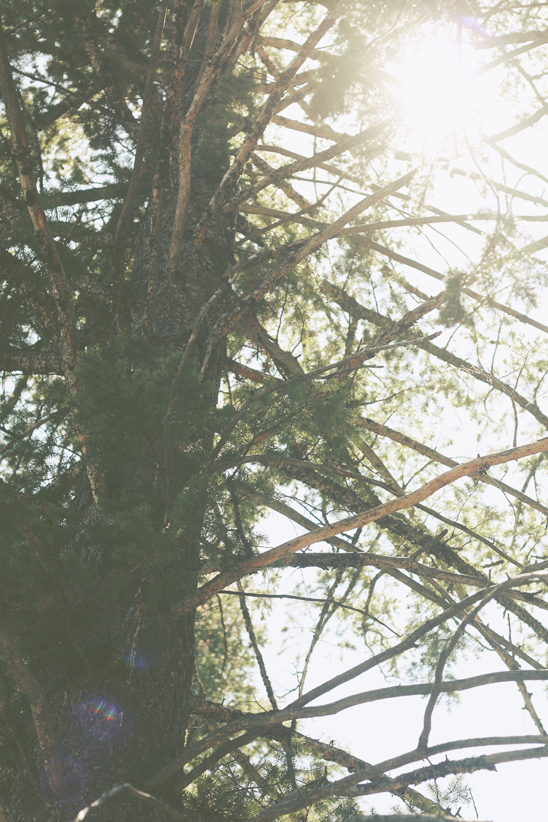 Sunlight through the branches | Tree Talker