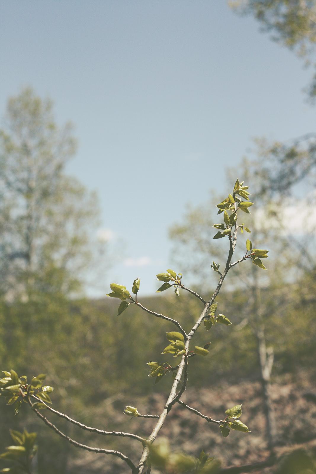 New Life | Tree Talker