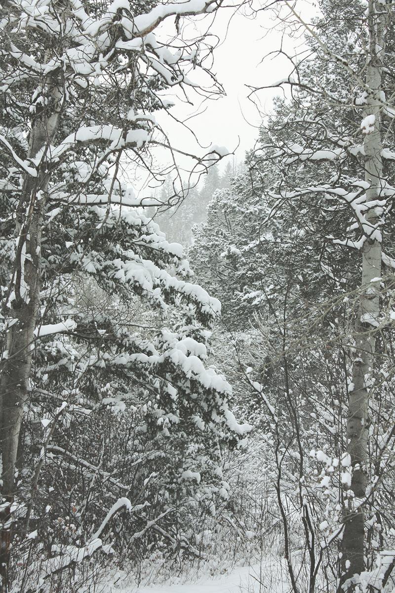 Winter Wonderland | Tree Talker Art