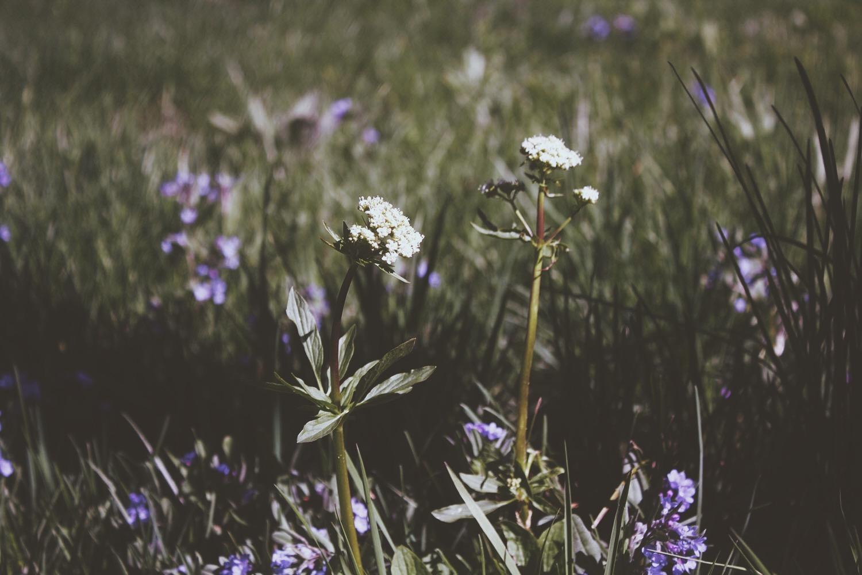 Wild Flowers | Tree Talker Art