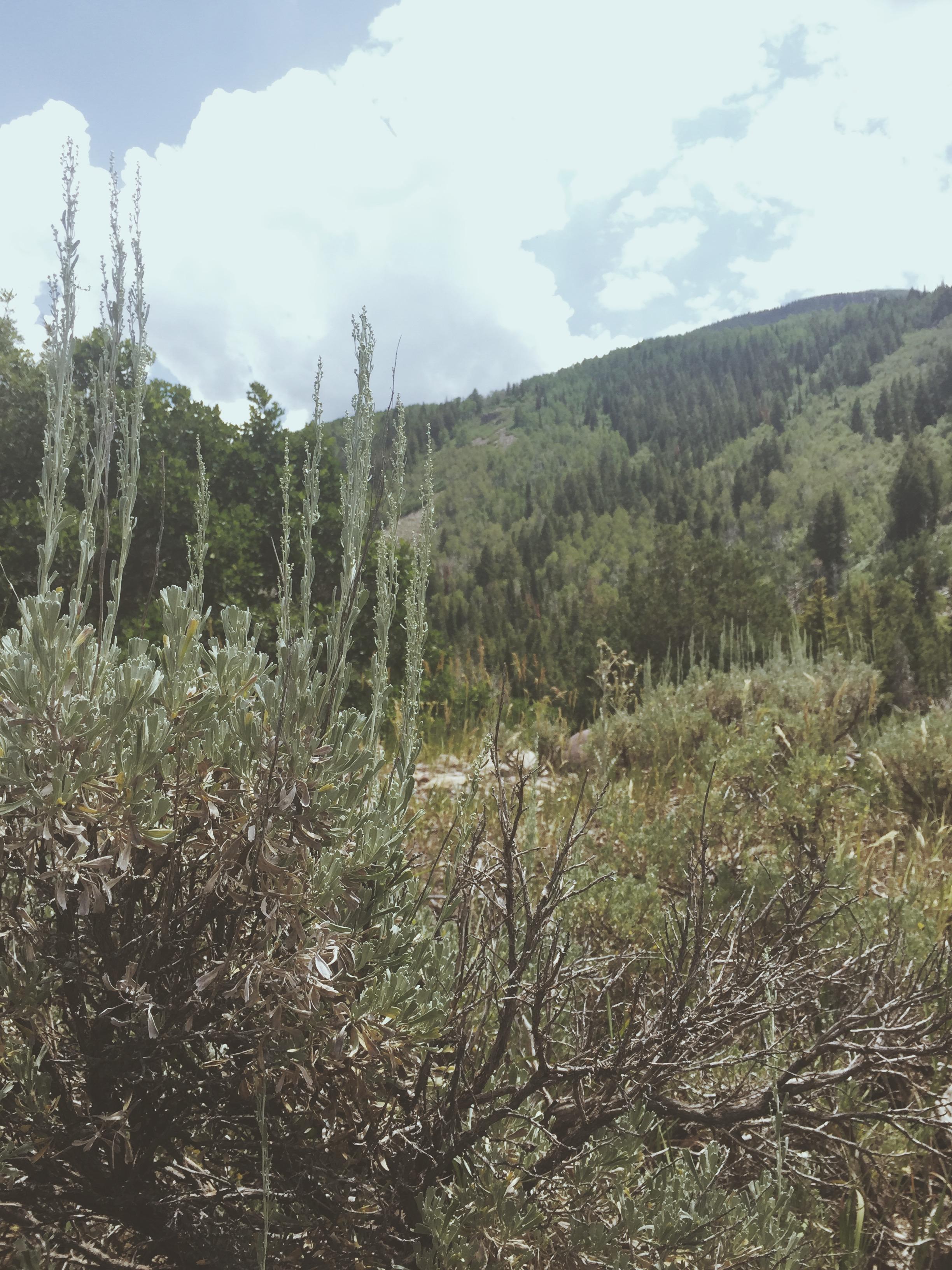 Mountain Ridges | Tree Talker Art