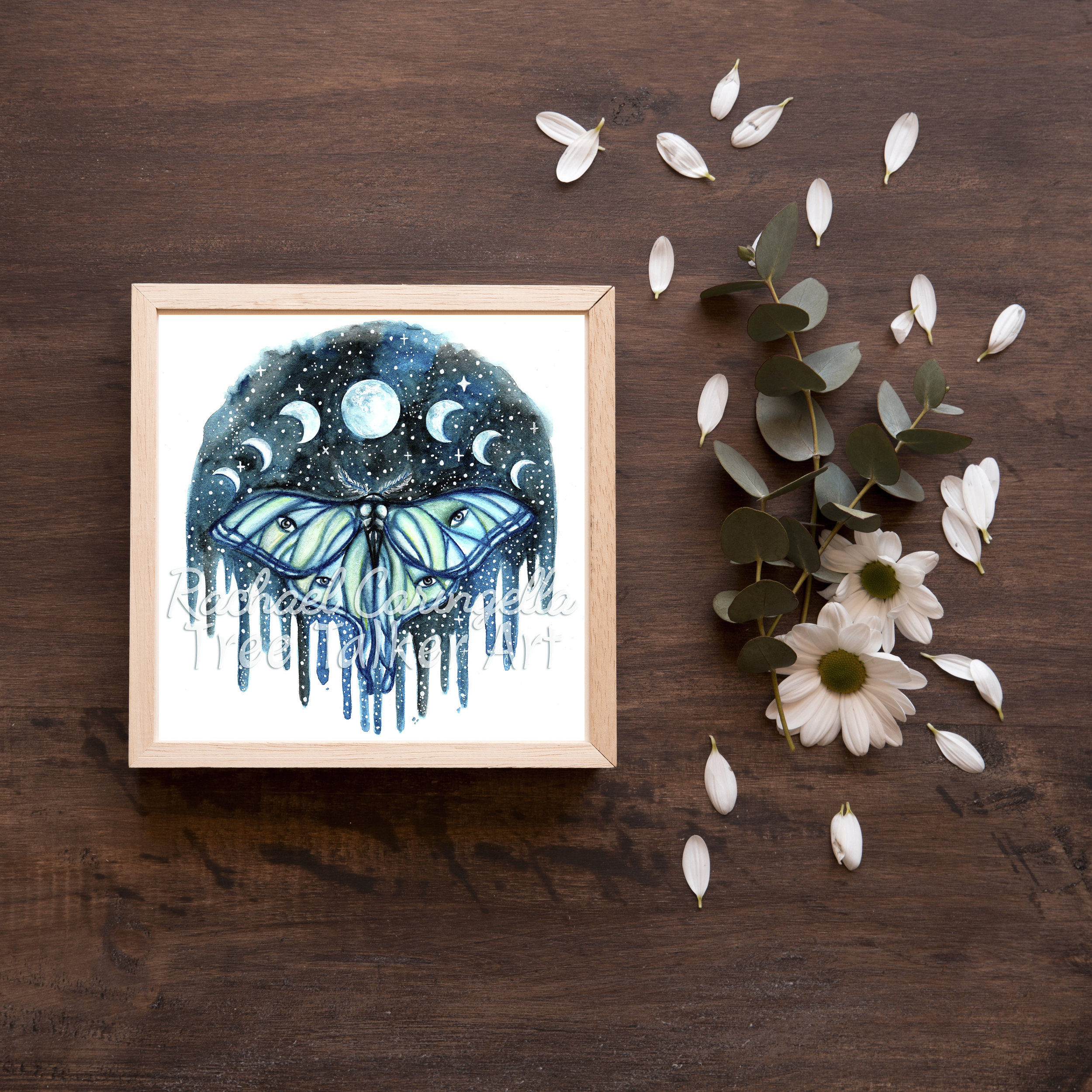 Luna Moth Lunar Phase Moth | Tree Talker Art