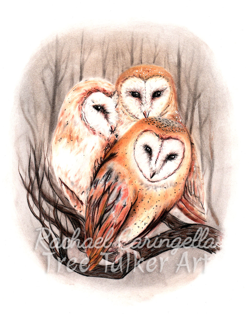 Barn Owls Art | Tree Talker Art | Rachael Caringella