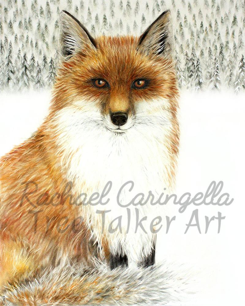 Red Fox Art | Tree Talker Art | Rachael Caringella