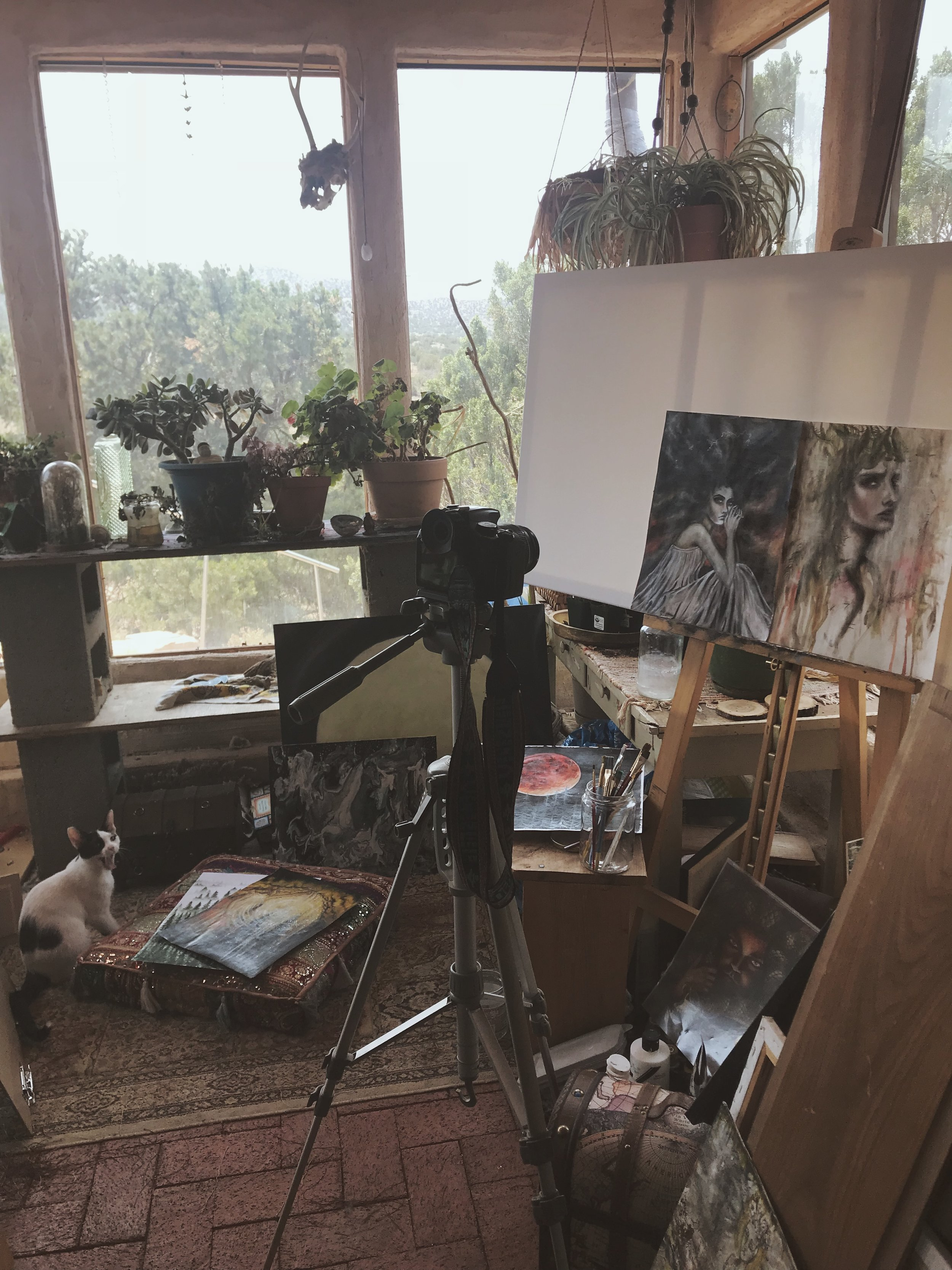 Photographing New Artwork | Tree Talker Art | Shop Update
