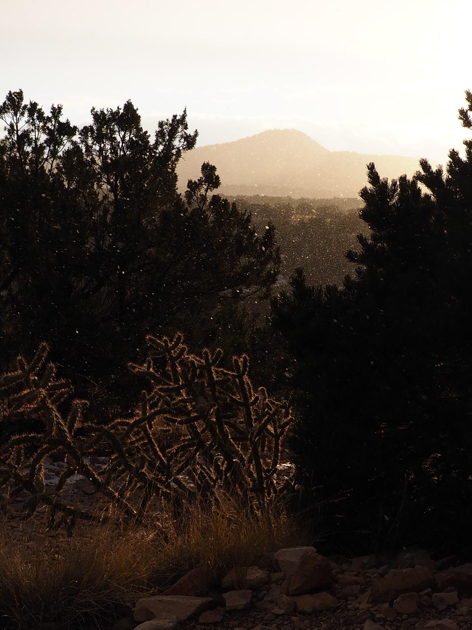 Tree Talker Art Desert Snow