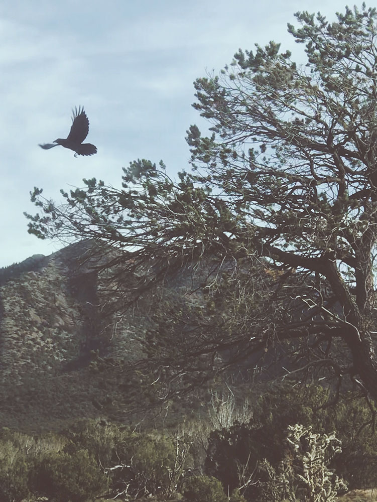 Tree Talker Art Blog | In pursuit of the numinous  | Facing the winds of change