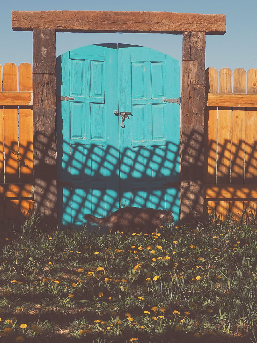 Cats and the blue door-  A House in Taos | Tree Talker Art