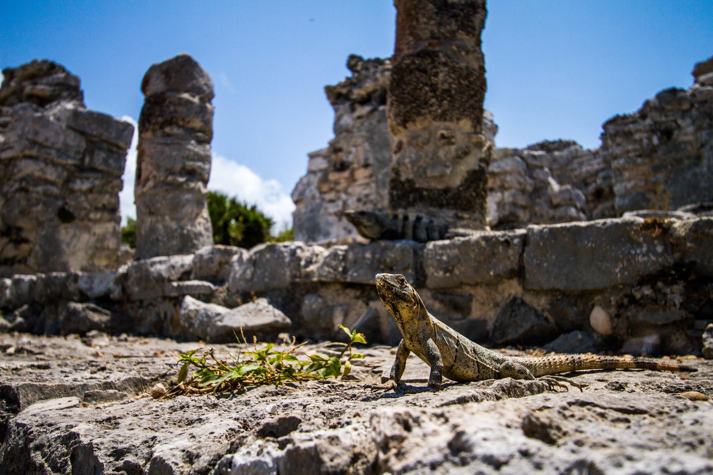 Tulum Ruins | Mexico