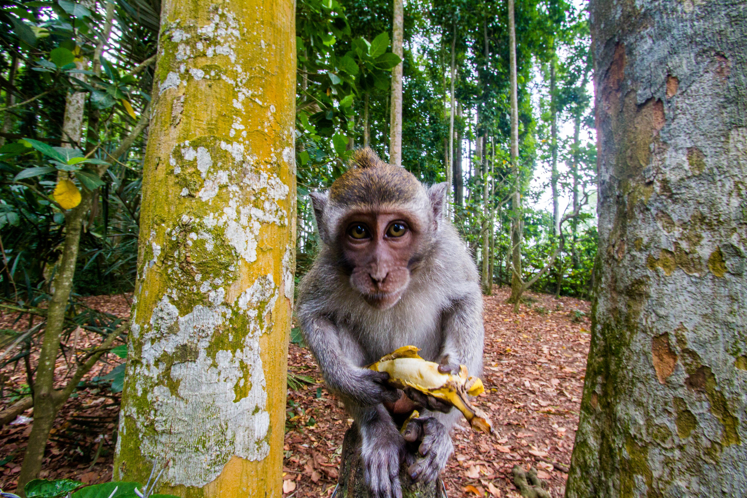 Sangeh Monkey Forest | Bali, Indonesia