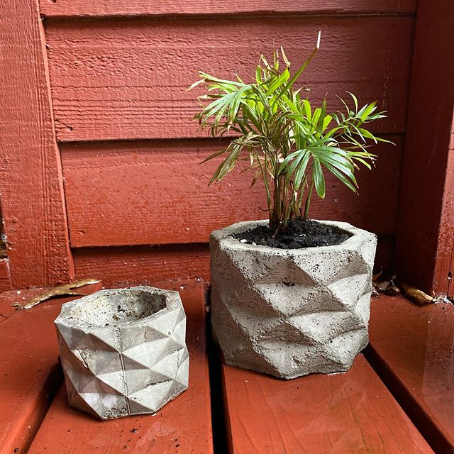 Having outgrown its original pot, plant gets a new bigger home! #3dprinted #castconcrete #weekendproject