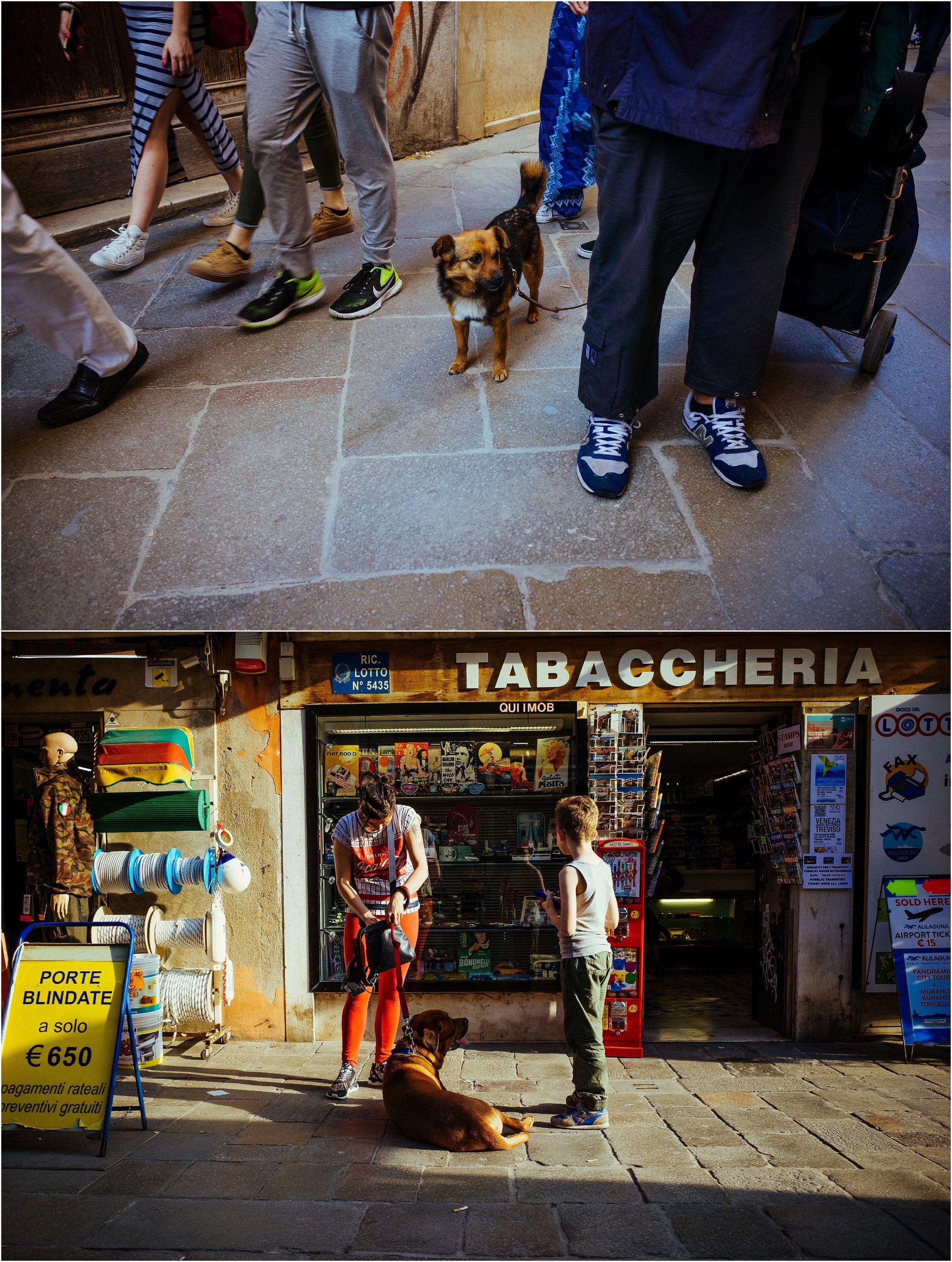 dogs in venice_0011.jpg