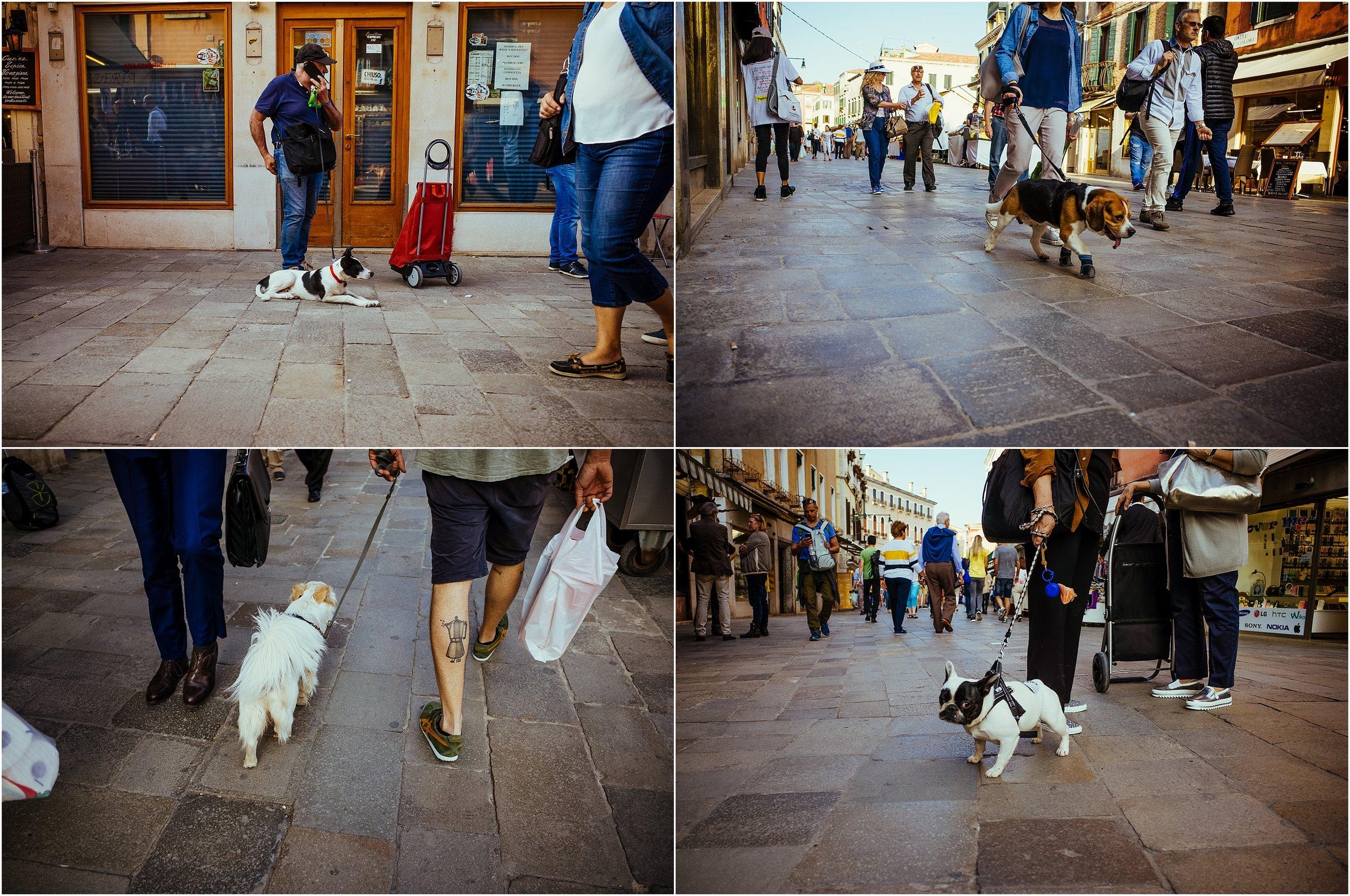dogs in venice_0012.jpg