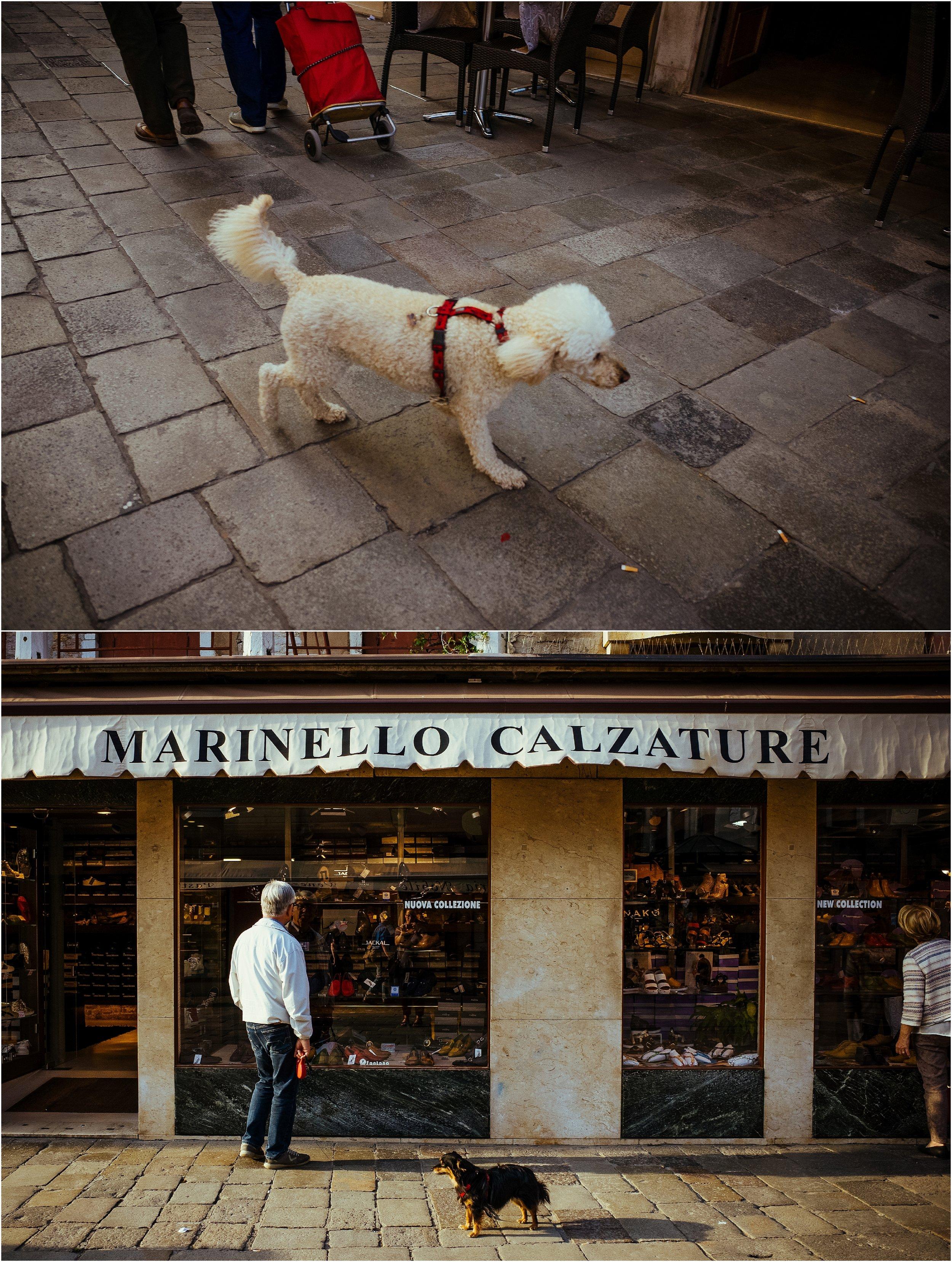 dogs in venice_0014.jpg